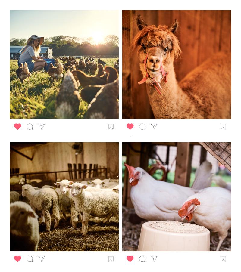 Magon-publication-instagram